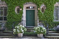 ivy + potted hydrangea + green door