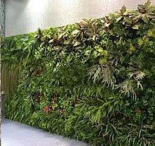 Outdoor Artificial Green Wall Made of Artificial Fern , Artificial Tree Leaf Artificial Grass Mat, Artificial Green Wall, Artificial Hedges, Artificial Boxwood, Artificial Plants, Succulent Wall Art, Garden Online, Real Plants, Natural Garden