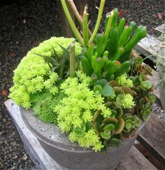 Succulents - wish they would include the variety names of the plants.