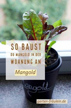 So baust du Mangold auch in den Herbst- und Wintermonaten in deiner Wohnung an. Alles rund um´s Indoor Gardening jetzt lernen! Der Computer, Cluster, Planter Pots, Indoor, Gardening, Tips And Tricks, Balcony, Round Round, Interior
