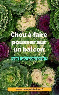 7 choux qui poussent en pot et jardinière sur balcon - Mon Petit Balcon Le Chou Kale, Pots, Green Garden, Cabbage, Planters, Vegetables, Gardening, Cooking Kale, Easy Plants To Grow