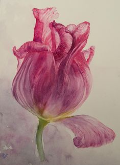 Watercolors, Painting, Pictures, Art, Tulips, Kunst, Water Colors, Painting Art, Watercolor Paintings