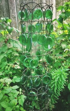 Glass bottle bottoms attached to old wire fencing. Great for filling gaps between plants.