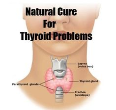 Natural Thyroid Cures Check more at http://www.healthyandsmooth.com/thyroid-supplements/natural-thyroid-cures/