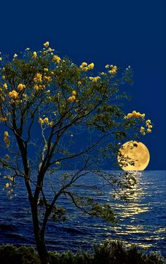 I like the flowers on the bush/tree being the same color as the moon on the horizon. I like the ripples in the water are detailed and match the curve of the shore. Moon Pictures, Nature Pictures, Pretty Pictures, Beautiful Moon, Beautiful World, Beautiful Places, Ciel Nocturne, Image Nature, Shoot The Moon