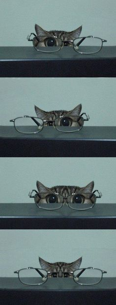 Reminds me of my kitties - AWW - - kitty & glasses I'm training to be a private eye. Let's see should I use this eye or this eye or both eyes? I think this might be harder than I thought. The post Reminds me of my kitties appeared first on Gag Dad. Animals And Pets, Baby Animals, Funny Animals, Cute Animals, Funniest Animals, Sleepy Animals, I Love Cats, Crazy Cats, Cute Cats