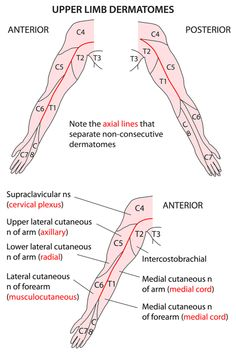 Instant anatomy is a specialised web site for you to learn all about human anatomy of the body with diagrams, podcasts and revision questions Muscle Anatomy, Body Anatomy, Hand Therapy, Massage Therapy, Upper Limb Anatomy, Nerve Anatomy, Physical Therapy Student, Gross Anatomy, Human Anatomy And Physiology