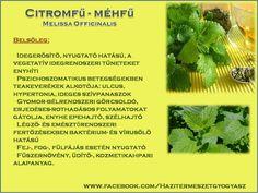 Életmód cikkek : Citromfű Zöldség és gyümölcsök hatásai Vitamins, Spices, Food And Drink, Healthy Eating, Herbs, Omega, Medicine, Plant, Sons