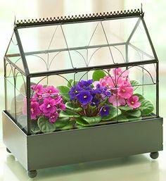 a terrarium of purple african violets