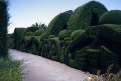 This magnificent hedge contains a dramatic series of high arches creating a tunnel like passageway