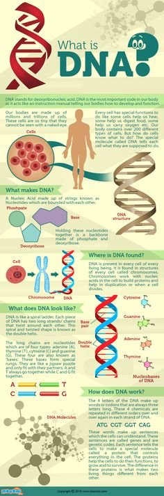 DNA stands for deoxyribonucleic acid. DNA is present in every cell of every living being. It is found in structures of every cell called chromosomes. Read more fun and educational biology articles here http://mocomi.com/learn/science/biology/