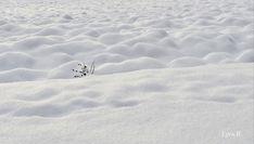https://flic.kr/p/RVP8v7 | Snowy field / Havas szántóföld | ackerland  arable  blanket  hó  hópaplan  land landscape  landschaft  schnee  schneedecke  snow szántóföld  táj  tél  winter