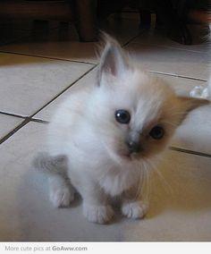 Blue eyed baby! Neeeeeeed one!!!!!!!!!!!!!!!!!!