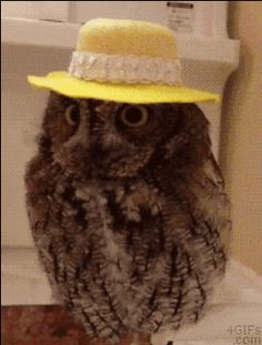 Owl Shows Venerable Side - Library Cat Funny Owls, Funny Animals, Cute Animals, Animal Fashion, Memes, Crochet Hats, Bird, Cats, Buzzfeed