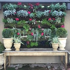 Monrovia (@monroviaplants) • Instagram photos and videos
