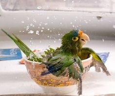 Photo: Parrot taking a bath aboard a boat picture on VisualizeUs