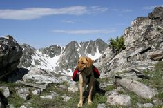 dog in hiking pack
