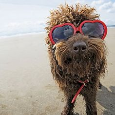 dog friendly beaches if you're planning a trip with your furry child