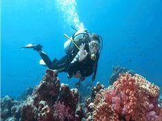 Diving Panama City, Florida