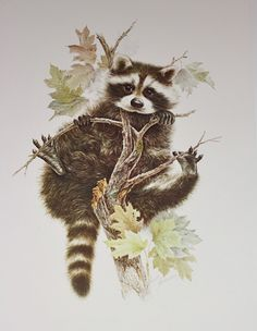 Cute Raccoon- 1976 Vintage Animal illustration Sketch Print Book. $10.00, via Etsy.