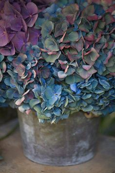 ❥ Dried....as summer turns to autumn hydrangeas turn blue and purple.. Perfect for fall arrangements..