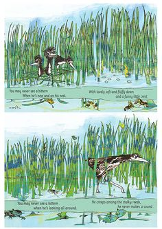 """two more spreads from """"All About Bitterns"""" created with an RSPB Audience interested in Conservatio in mind. Explore the reeds and see if you can spot the bitterns"""