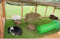 Our 'A hutch is Not Enough' study showed that even in winter, rabbits prefer the…