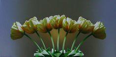 Leon Belsky - Tulip Symmetry