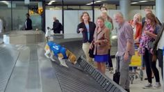 That settles it, we're only flying KLM from now on.This airline's lost and found service is AN ADORABLE DOG