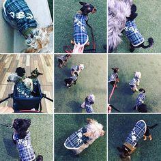 #暖かい週末 !!早速#名前入り洋服 着て#幕張新都心 の#ドッグラン へ遊びにいきましたぁ〜!!皆さんに名前呼んでもらって!ナデナデしてもらいました(笑)  #愛犬#家族#ペット#犬#4匹#ヨーチー#ヨーチワ #チワキー#シープー#チワプー#チワワ#ヨーキー#プードル#シーズー#ポテト#サラダ#とまと#バジル#猫 #オシキャット #ヒメギミ#可愛い#癒し#犬服