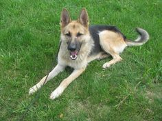Hi there. My name is Nash. I am about 1 1/2 years old and I weigh about 50 lbs.I am an exceptionlly handsome fellow who was picked up as a stray from the Lisbon/ Rogers area. Don't ask how a handsom fellow like myself ended up out there on my own...