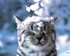 the cat loves snow