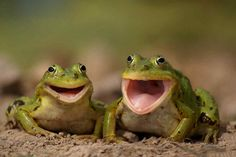 Amazing Colorful Frogs