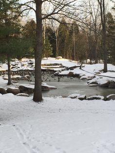 Winter Pond - 1