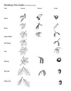 awesome site for exploring nature resources. Do a unit on tree identification and collect leaves to put in a lapbook or laminate and put on a key ring.