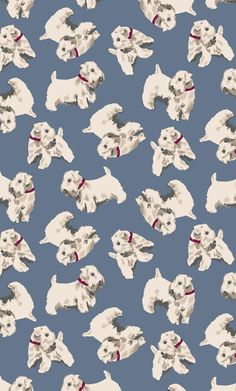 Billie | Billie the handsome Sealyham Terrier is back and starring in his very own solo print inspired by doggy designs from our archive. Woof! | Cath Kidston Autumn Winter 2016 |