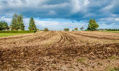 Agriculture / field by ChristianThür Photography on Creative Market Agriculture, Vineyard, Christian, Marketing, Creative, Photography, Outdoor, Landscape, Outdoors