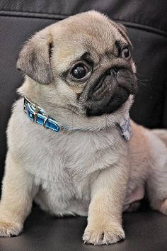 www.facebook.com/TheClassyDog Designer Dog Clothes, Luxury Dog Beds, Designer…