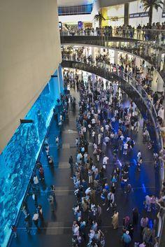 Dubai Aquarium & Underwater Zoo. Dubai 106