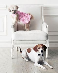 #MarthaStewartPets Bridesmaid Dress, $15.99 @petsmartcorp