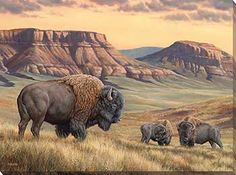 Bison Buttes Wrapped Canvas Art by Rosemary Millette Wildlife Paintings, Wildlife Art, Animal Paintings, Animal Drawings, Drawing Animals, Horse Drawings, Drawing Art, Buffalo Animal, Buffalo Art