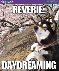 Reverie: daydreaming