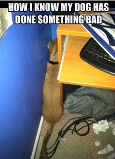 hahaha At least some dogs have shame... #funnydogshaming