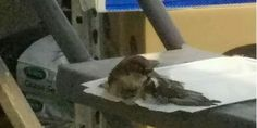 OMG I WILL NEVER STEP FOOT IN A LOWES EVER AGAIN!!!!  Please Sign: Lowe's Lawn & Garden department in Lowell, MA, is KILLING BIRDS THAT FLY INTO THE GARDEN AREA with industrial-strength Glue Trap.