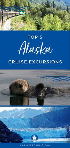 Top 5 Alaska Cruise Excursions | Alaska is a bucket lists destination. An Alaska cruise vacation is a great way to see the Last Frontier. All the major cruise lines (Princess, Royal Caribbean, Norwegian, etc.) sale to the top ports in Alaska, including Skagway, Juneau and more. From whale watching to gold panning, there is something for everyone and every budget. We help you decide with our top 5 Alaska excursions. Check it out! #Alaska #AlaskaCruise #AlaskaVacation #CruiseVacation #Excursions