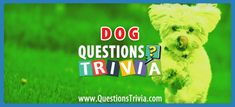 It's time to test how much you really know about dogs with this exciting dog trivia quiz. Can you guess the right answer to these dog trivia questions? Trivia Quiz, Trivia Games, Trivia Questions For Kids, Quizzes For Kids, Keep It Cleaner, Knowledge, Friends, Dogs, Party
