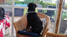 Mit hundeliv med Vaks.: Fugle eller mad... / Birds or food...