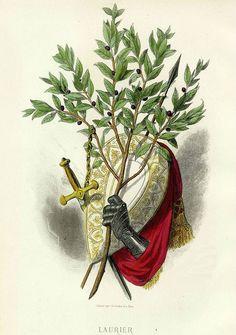 Лавровая ветвь - символ победы и доблести