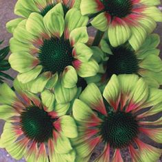 coneflower... how pretty is this?
