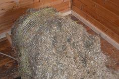 Shag Rug, Material, Rugs, Home Decor, Hemp, Shaggy Rug, Homemade Home Decor, Types Of Rugs, Carpet
